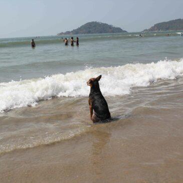 Hundflickan i Palolem