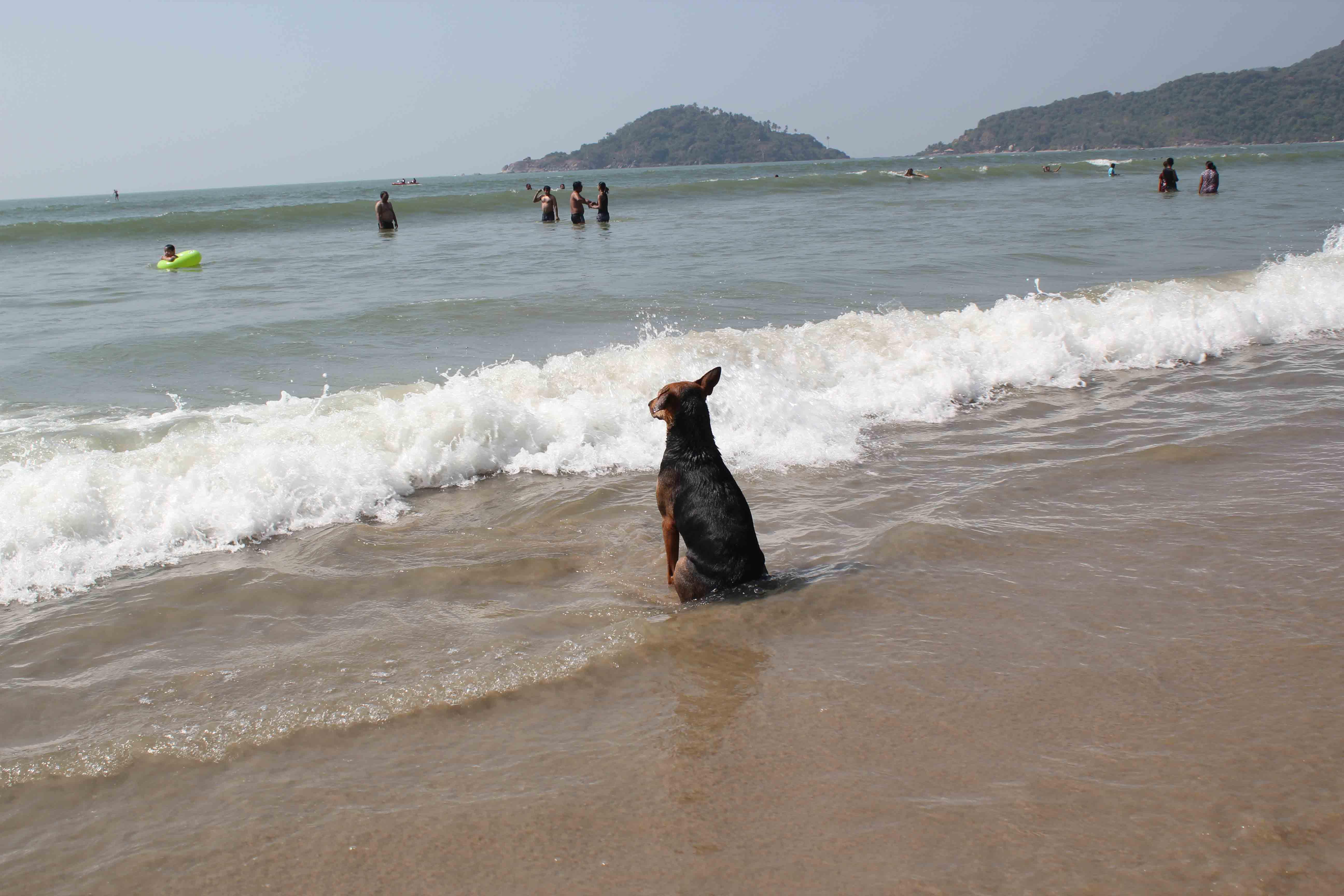 Var är vågorna?